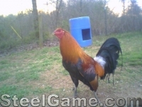 Brood Cock