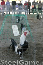 Rooster entry