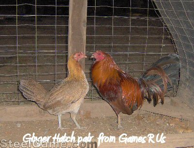 ginger_hatch_pair