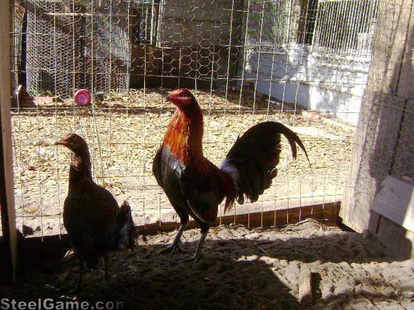 Marion Rose Hatch Cock