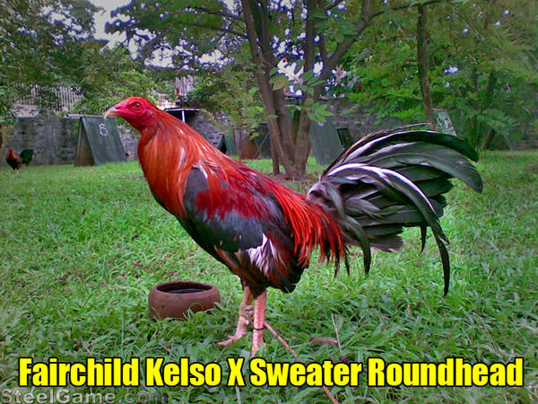 Kelso-Sweater-Roundhead