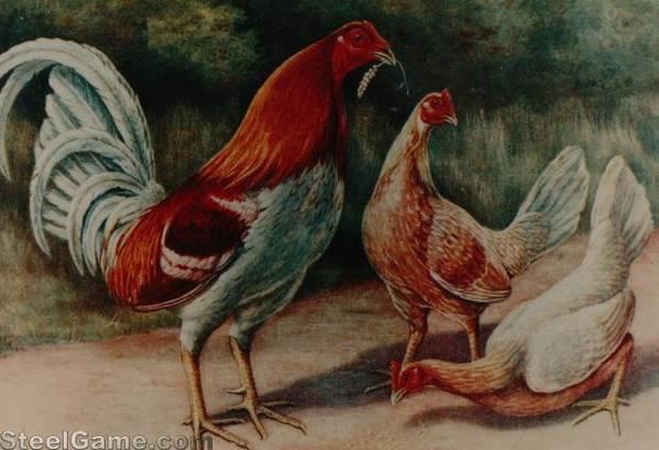 atkinsonsprint of his pyle fowl