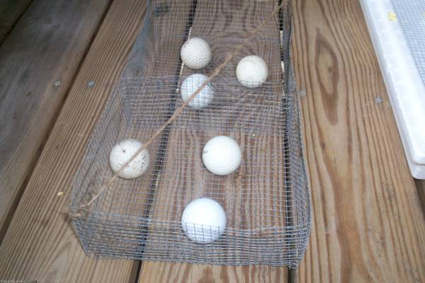 HATCHING TRAY