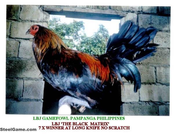D_BLACK_MATRIX_-A