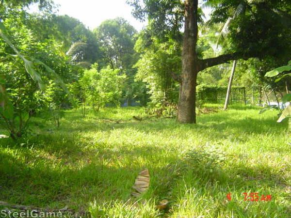 old green farm3